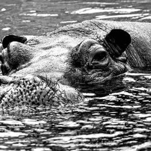 Blufoto_animals_001